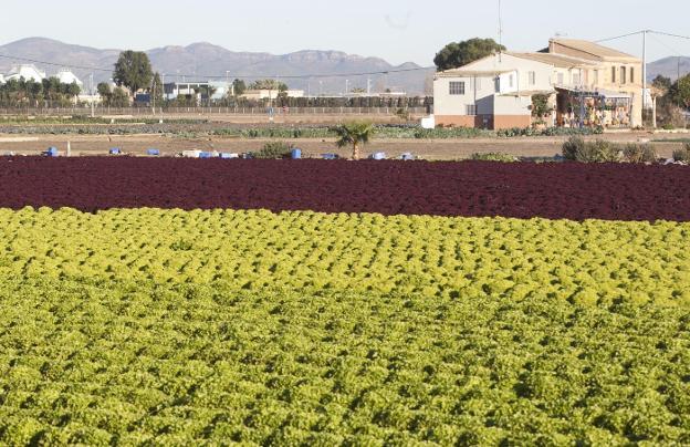 Circuito Horta Nord : Circuito horta nord valencia la huerta de muere