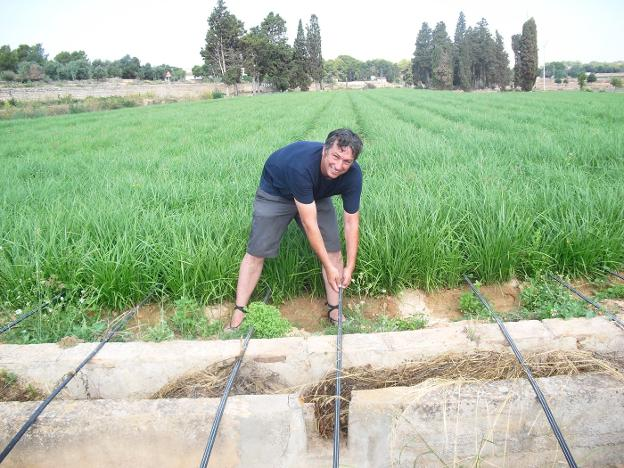 Revolucionario cultivo de chufas con riego a goteo   Las